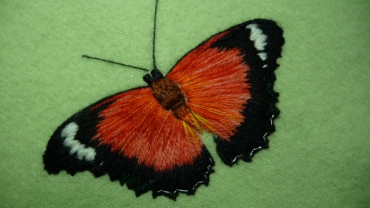 Red Lacewing Cethosis Cydippe