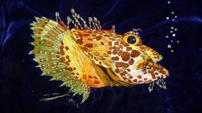A Groper Fish