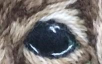 Jasper's Eyes